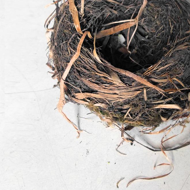 Schutz, Ausstellung, Fotoausstellung zum Thema Schutz, Fotografie, Heft zur Fotoausstellung, Nestwärme, Nestflucht, Nest