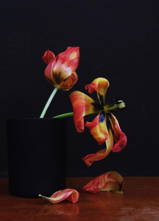 12von12, Stillleben, verwelkte Tulpen, schwarze Wand