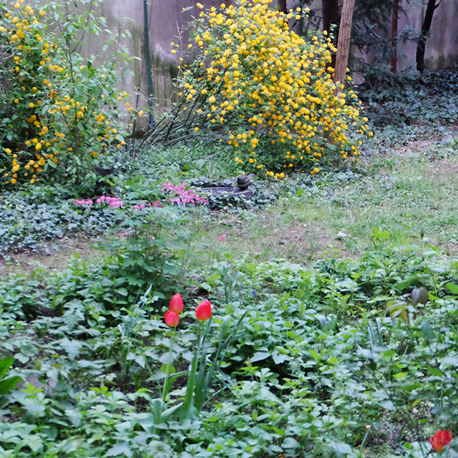 12von12, wilder Garten, Köln, Belgisches Viertel, Hinterhof, Frühling
