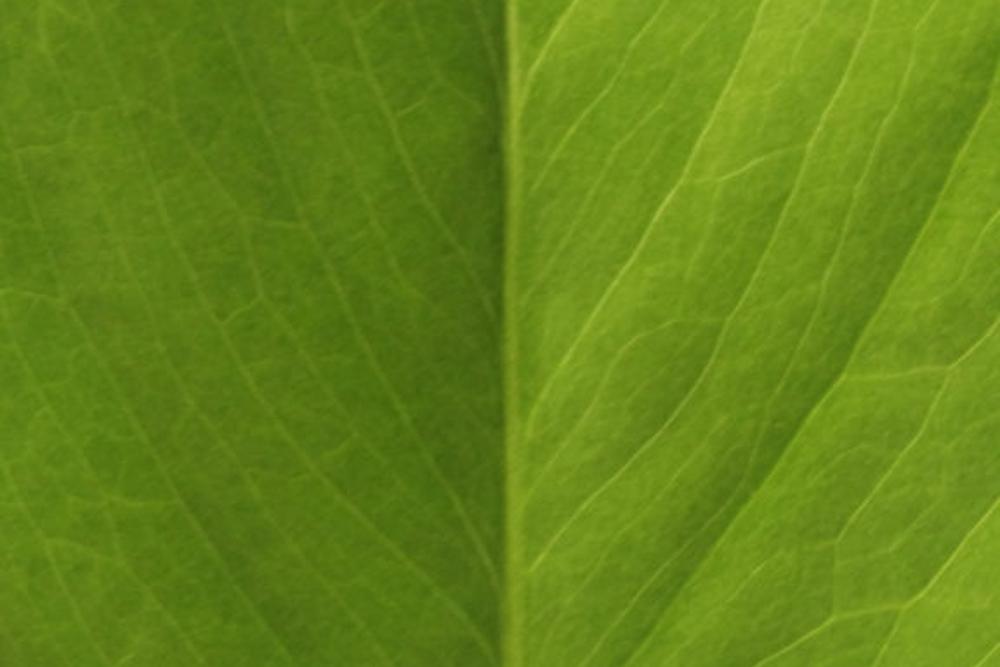 greenwashing, systemkritik, kapitalismuskritik, verarsche von konzernen, konsumkritik