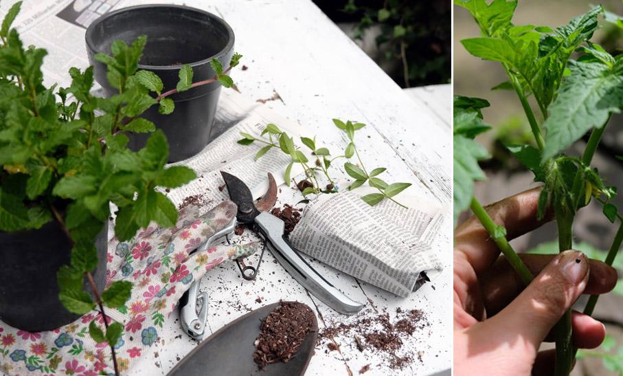 Pflanzen tauschen, Pflanzen retten, nachhaltig faire Blumenerde, Zimmerpflanzen fair einkaufen, faire Pflanzen, nachhaltige Pflanzen, Bio Pflanzen kaufen, zero waste Pflanzen, nachhaltige Pflanzen, ökologisch nachhaltige Balkonpflanzen, ökologisch nachhaltige Gartenpflanzen, Pflanzen für Artenvielfalt, Tipps für faire Pflanzen, zero waste pflanzen einkaufen, plastikrei Pflanzen kaufen